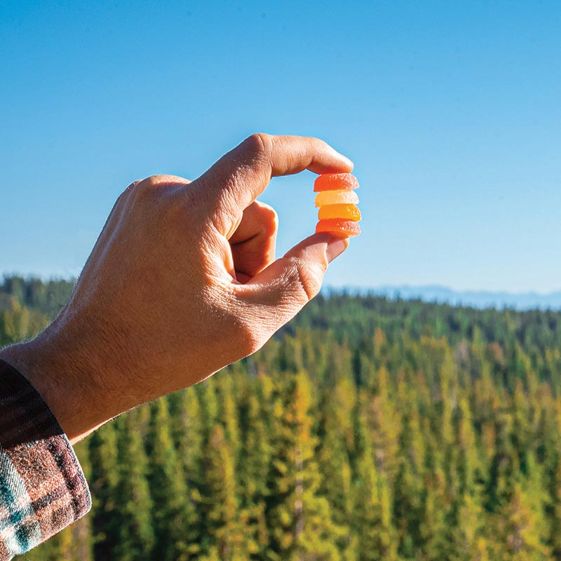 Mans Hand holding 4 wana hemp gummies stacked with pine tree forest background